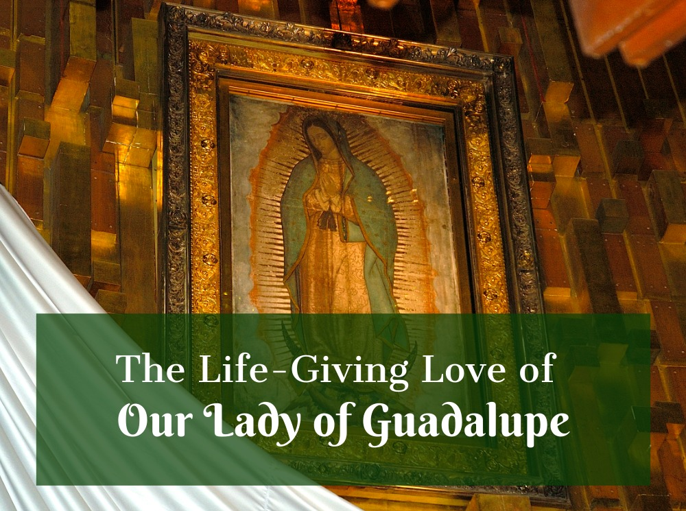 The Life-Giving Love of Our Lady of Guadalupe